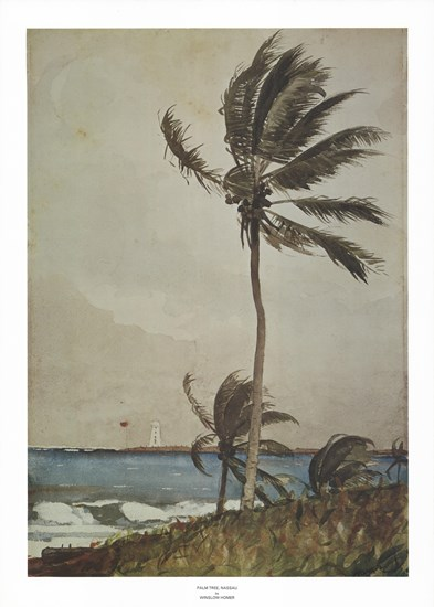 Palm Tree, Nassau by Winslow Homer art print