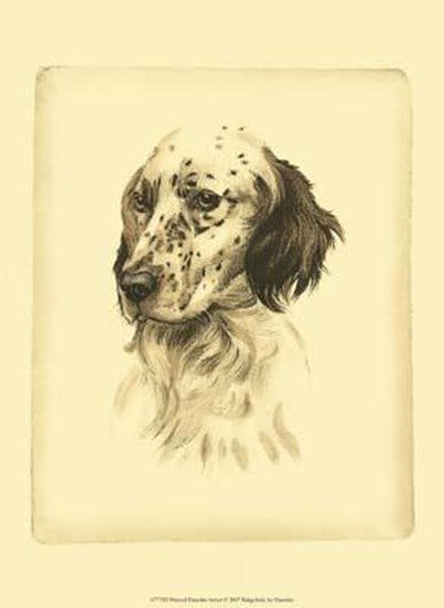 Printed Danchin Setter art print