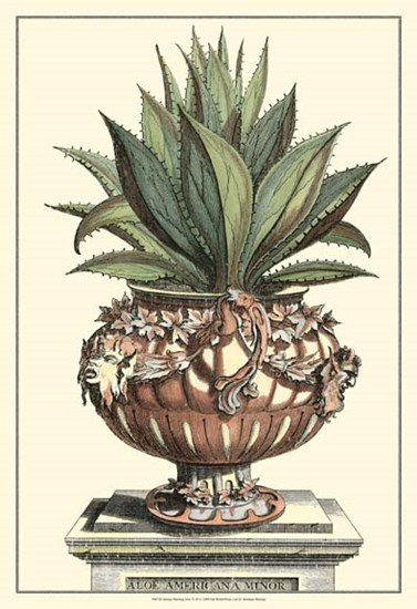 Antique Munting Aloe IV by Abraham Munting art print