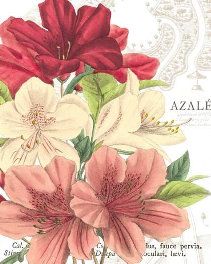 Azalee Jardin II by Wild Apple Portfolio art print