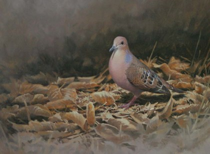 Mourning Dove by Michael Jackson art print