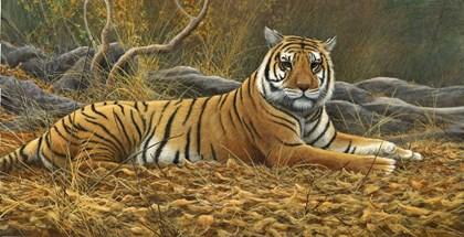 Bengal Tiger by Dr. Jeremy Paul art print