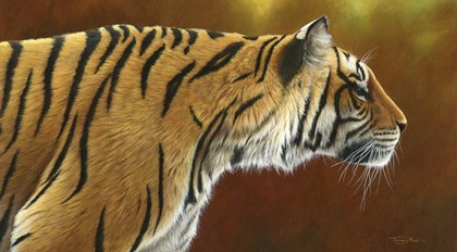 Tense Tiger by Dr. Jeremy Paul art print